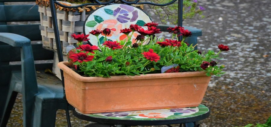 cheap landscaping ideas for renters